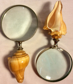 Magnifying glass with sea shell handle