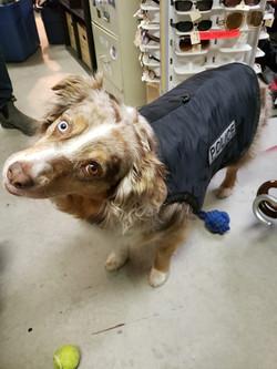 Medium size canine unit police vest