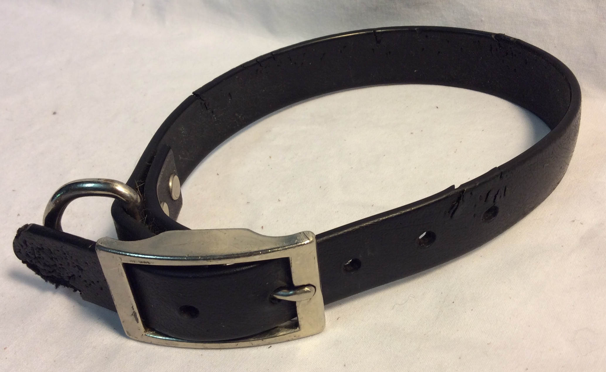 Aged black leather dog collar