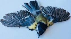 Dead finch