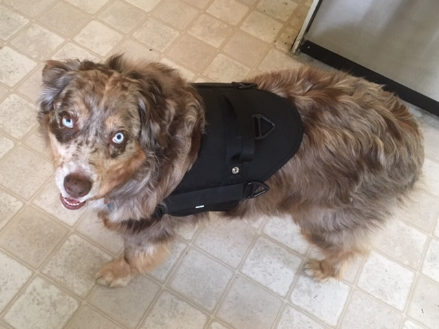Canine Unit Harness with Handle