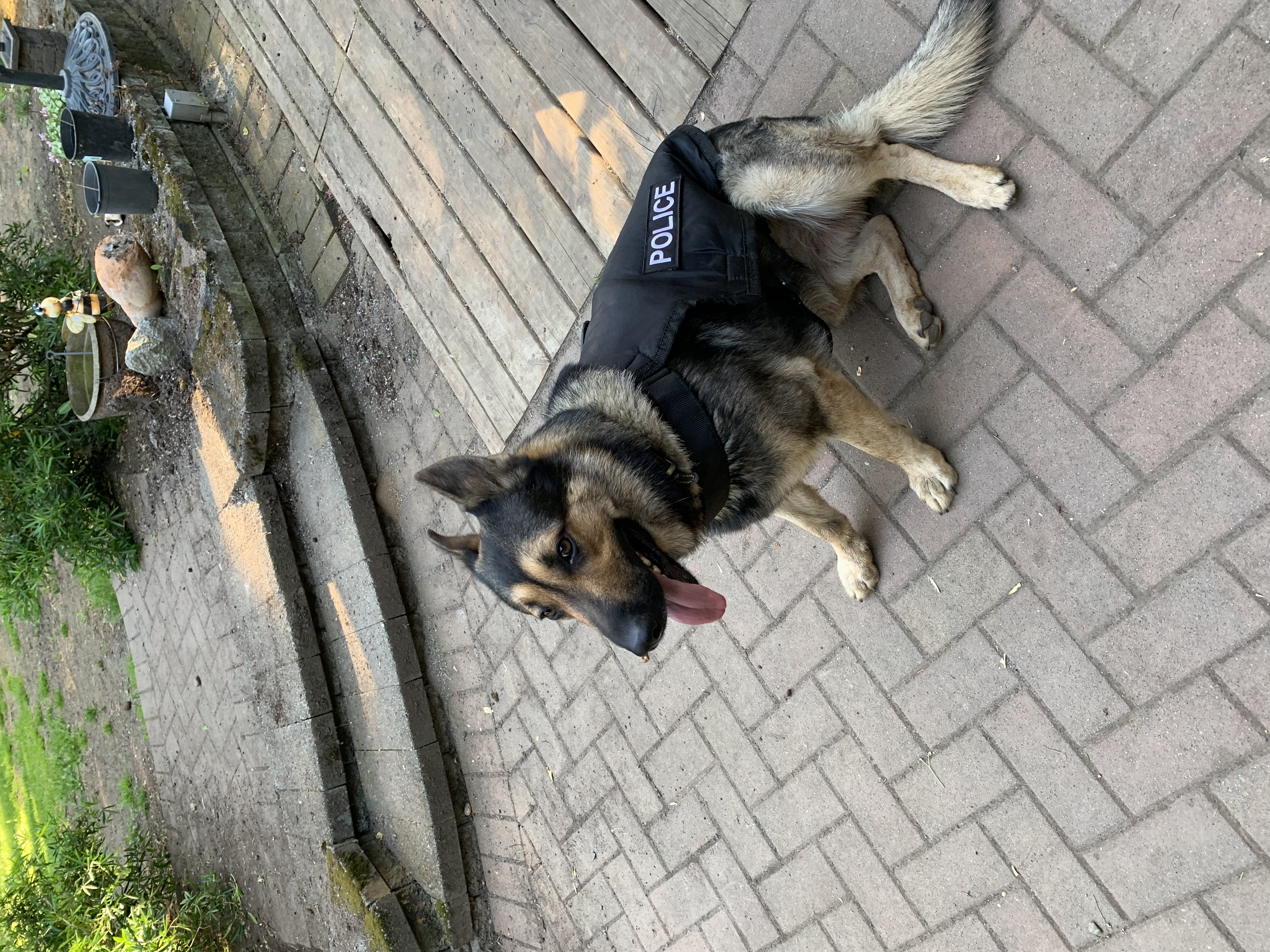 Large size canine unit police vest