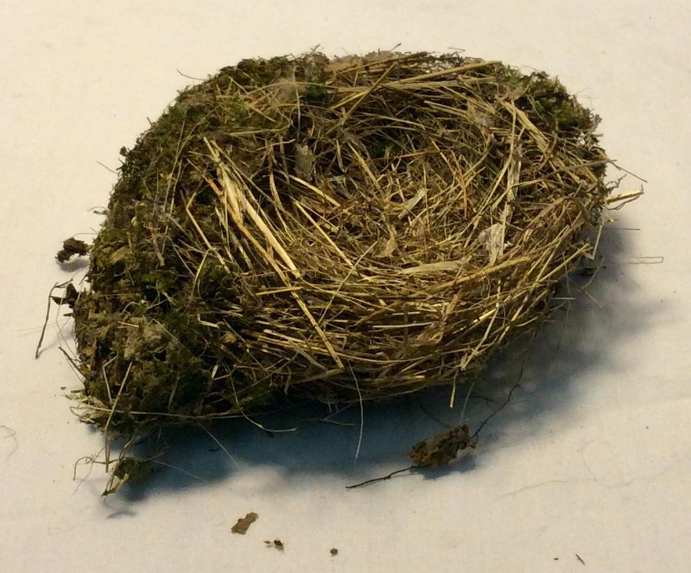 """Bird's nest approx. 6"""" in diameter"""