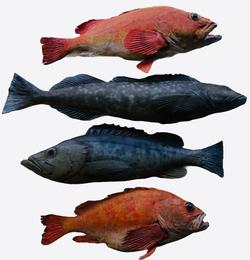 Various large fish