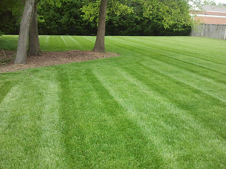 beautiful-stripes-chesapeake-lawn.jpg