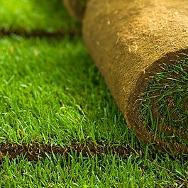 rolled-up-green-sod-grass.jpg