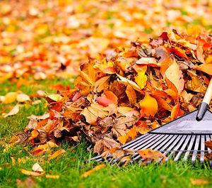 Leave-Pile.jpg