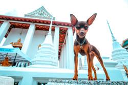 Bangkok30
