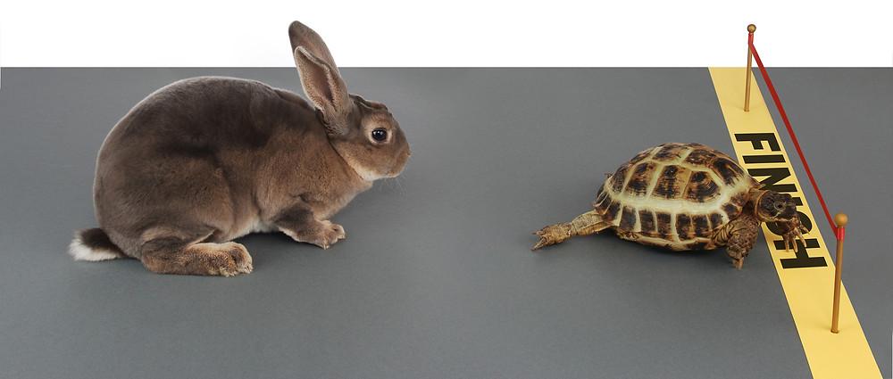 Tortoise-Hare.jpg
