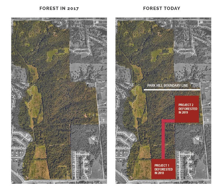 forest-comparison.jpg