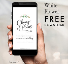 Blooms - White Flower