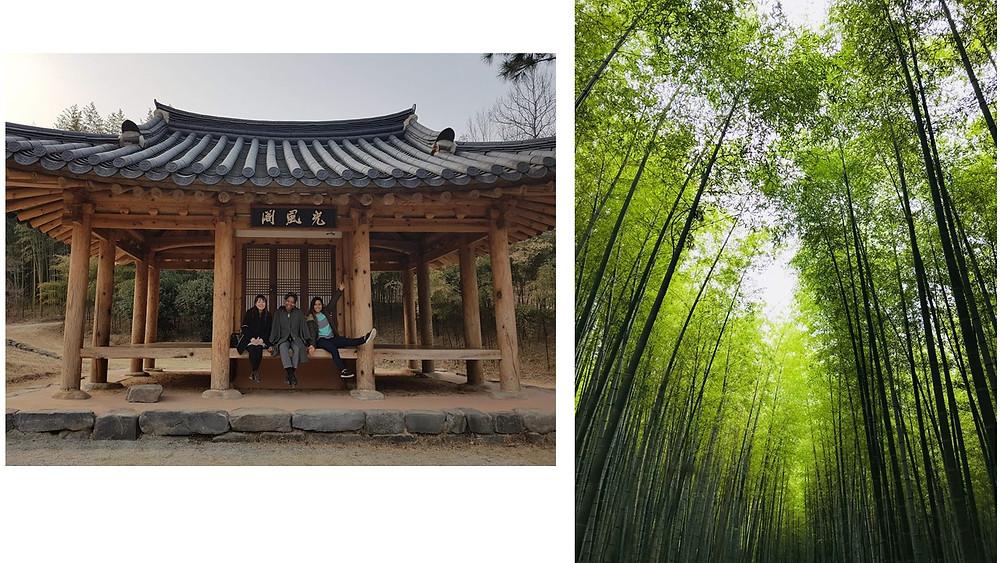 Damyamg Bamboo Forest