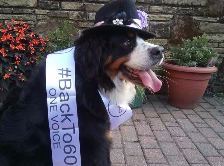 3 Scotland Dog b260.jpg