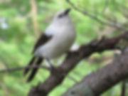 Birds_2020 (4).JPG