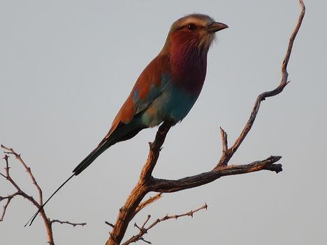 Birds_2020 (36).JPG