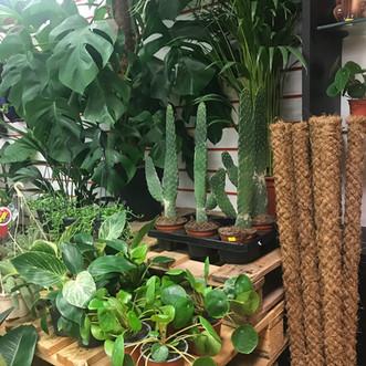 Plant Shop Manchester - Altrincham