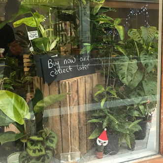 Plant Face - Chester Pop Up