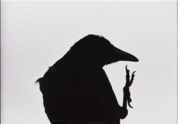 Misahisa Fukase - Ravens