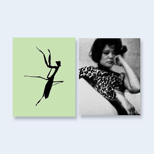 Daido Moriyama - Mantis