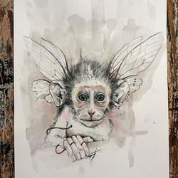 Cicada Monkey