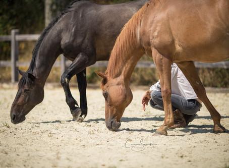 séances de méditation avec les chevaux