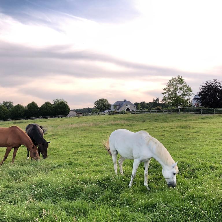 Atelier résidentiel de 2 jours au vert: les chevaux et les constellations familiales