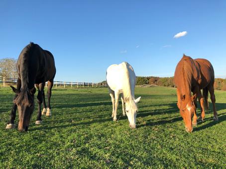 Méditation et pleine conscience en pleine nature avec les chevaux