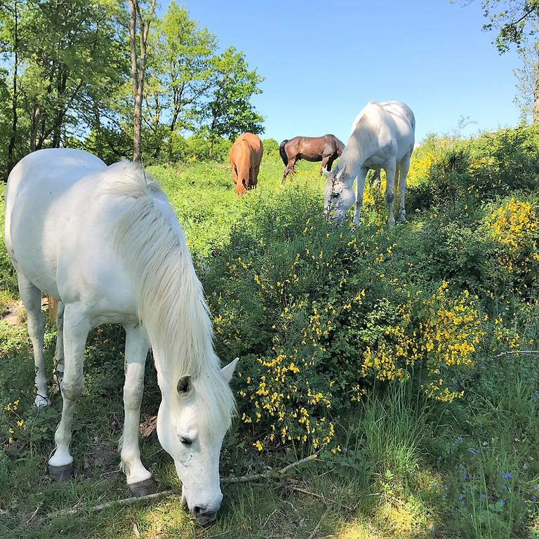 Séances de méditation avec les chevaux: plusieurs dates