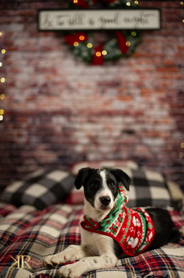 2020 Christmas Pictures