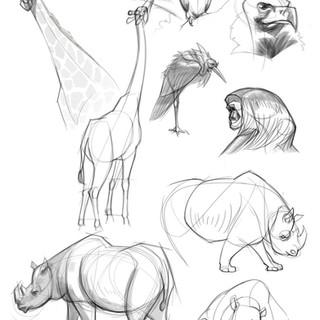 ZooSketches-2.jpg