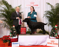 AKC NOHS Finals 2016 - Best of Breed