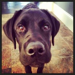 Puppy Remington