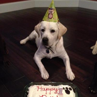 Grady's First Birthday
