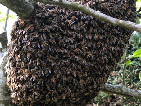 Swarm Collecting