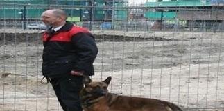 honden-beveiliging_edited.jpg