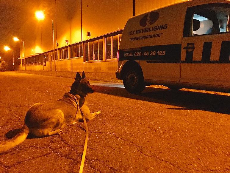 hondenbeveiliging.jpeg