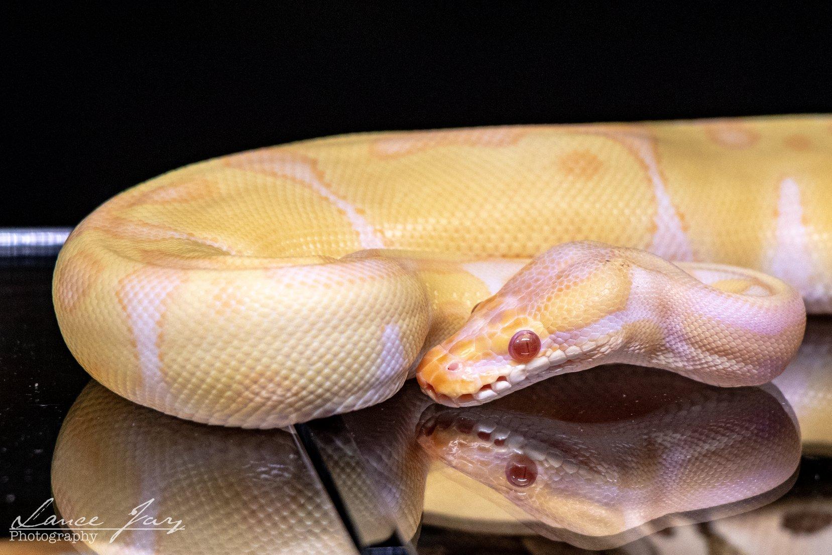 Home | Mid-Atlantic Reptile Expo