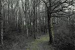 vignetteDSCF3708v16_3s2NC.jpg