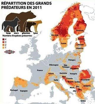 Répartition des grands prédateurs en 2011 en Europe