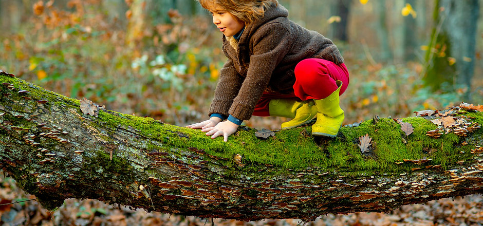 Little boy kid on a tree branch. Child c