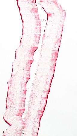 Zeichnung__0011b Kopie web.jpg