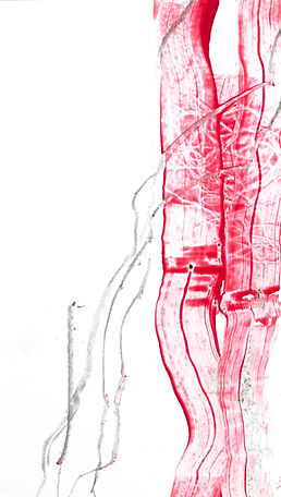 Zeichnung__0009 Kopie web.jpg