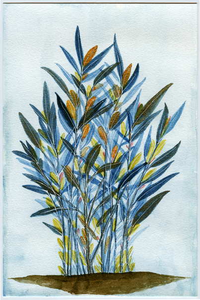 Water color-26.png