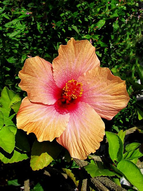 Exotic Flower 18