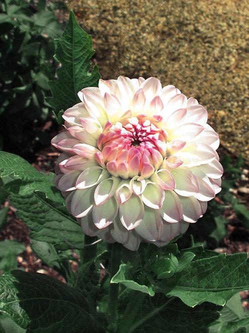 Exotic Flower 5