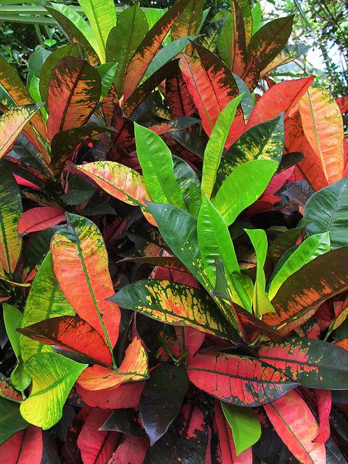 Exotic Flower 11