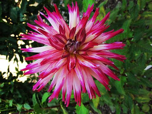 Exotic Flower 29