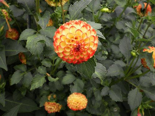 Exotic Flower 39