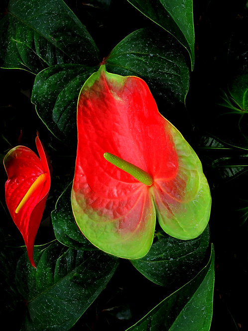 Exotic Flower 9