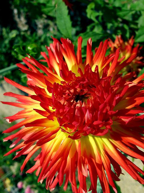 Exotic Flower 3